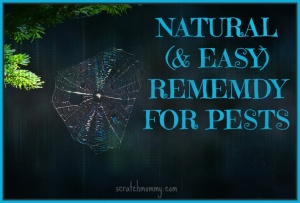 Natural & Easy DIY Remedy For Pests