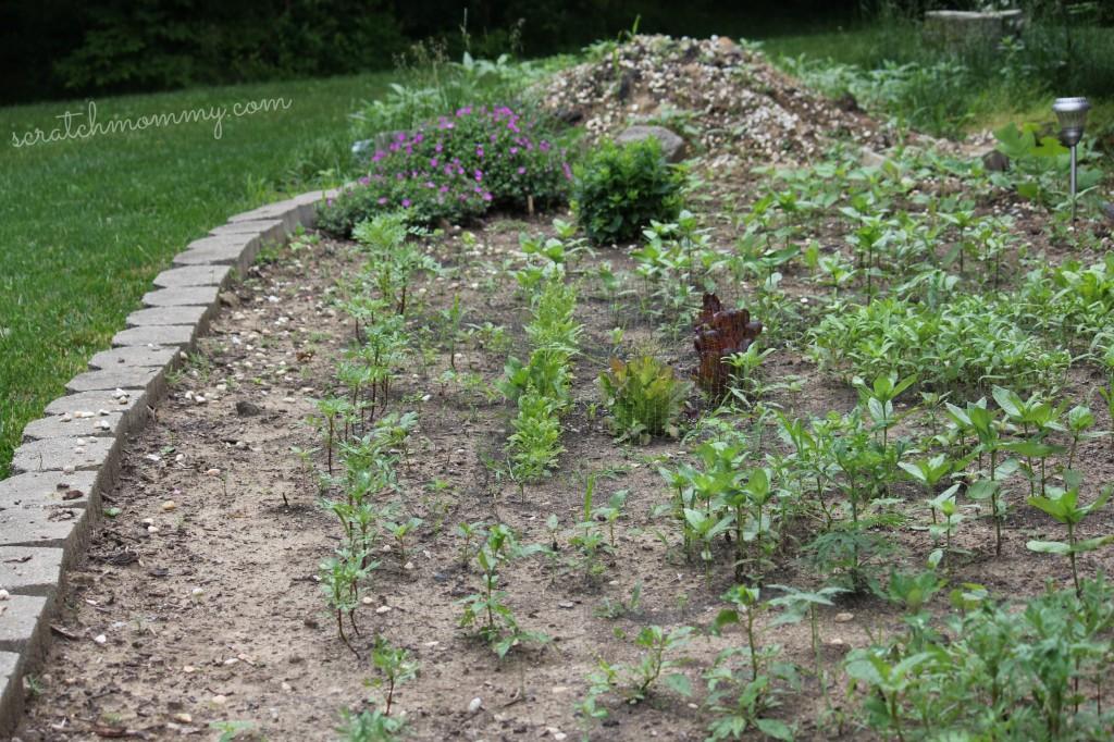 Front yard flower & veggie garden