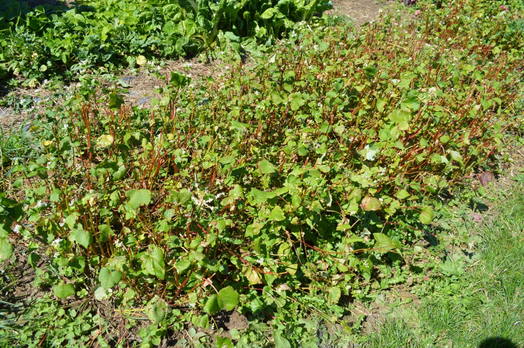 Claire shares her fall garden clean up checklist and the importance of preparing your beds for the winter months ahead.