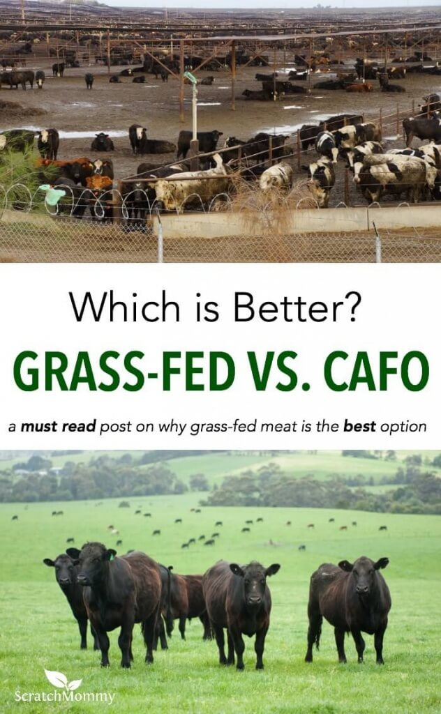 """Are you asking yourself the question, """"Why is grass-fed meat better?"""" If you are, here's a jam-packed post on the benefits of grass-fed meat and how to find it."""
