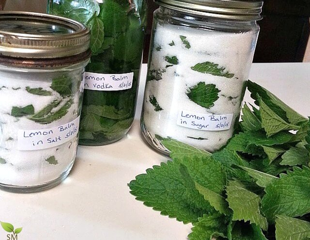 Lemon Balm as food. Such a fantastic and versatile herb. Check out our ultimate lemon balm guide. - Scratch Mommy
