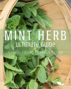Mint Herb Ultimate Guide (uses for body, home, and food!)- Scratch Mommy1